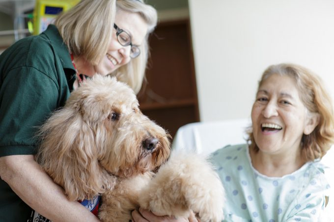 Rackley, a pet therapy dog registered through UF Health Shands Volunteer Services, visit a patient at UF Health Shands Cancer Hospital.